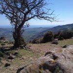 Escursioni in Aspromonte